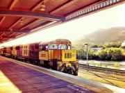 The-Sunlander-1953-2014-at-a-rustic-Qld-station